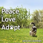 SPCAPeaceLoveAdopt