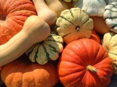 Pumpkins & Squash