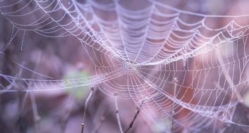 Halloween-SpiderWebs